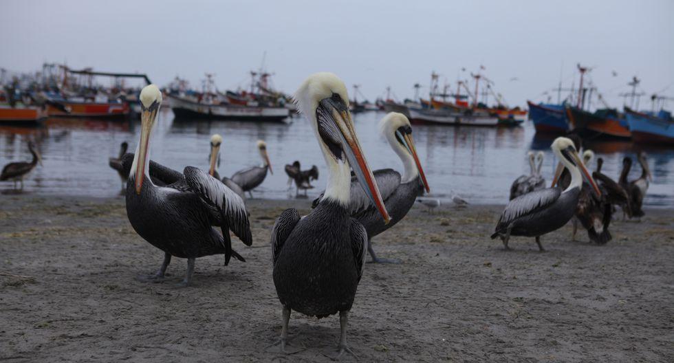 En el primer semestre llegaron 18,300 turistas a la Reserva Nacional de Paracas. (Foto: GEC)