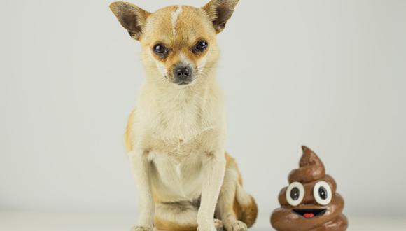 Los perros aprenden más rápido de lo que creemos. Seguramente tendrán más de un accidente, pero con información y disciplina lograrás tener un perro educado dentro de casa. (Getty)