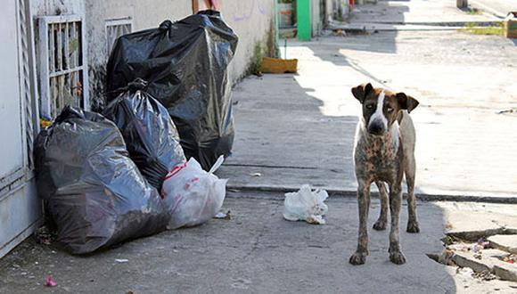 Se estima que en el Perú existen más de 6 millones de perros sin hogar, es por ello que muchos grupos promueven la adopción, la esterilización y la tenencia responsable de mascotas para reducir dicha cifra.