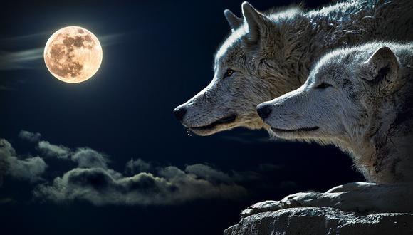 Fotocomposición muestra una pareja de lobos alumbrados por la luna llena. (Foto: cortesía Patrice Audet en Pixabay)