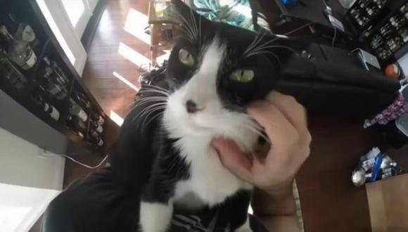 El video de la gata tiene más de 64 mil vistas. (Foto: Captura de YouTube)