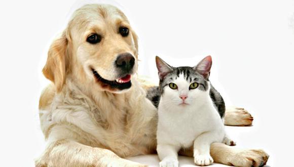 Como perros y gatos: Estas mascotas sí pueden llevarse bien