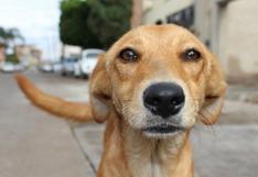 WUF: Conoce algunos retos de lidiar con vecinos y mascotas durante y después de la cuarentena