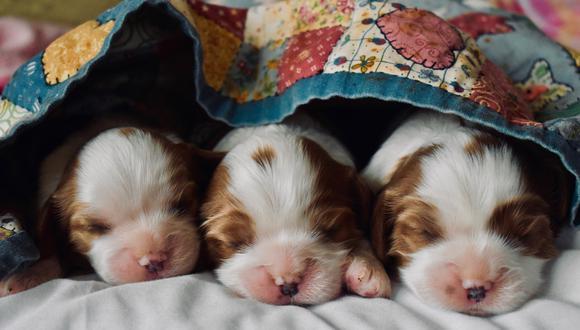 Puedes distinguir a cada cachorro poniéndoles una cinta de color diferente. Pésalos y hazles seguimiento.