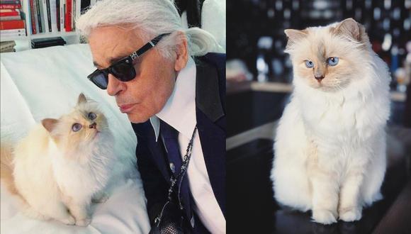 Choupette llegó a la vida del diseñador de Chanel a fines del año 2011. Hasta hoy, goza de cuidados de lujo como comer en bandeja de plata y viajar en jets privados. (Fotos: IG/ @choupetteofficiel)