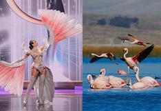 Parihuana: ¿en qué lugares del Perú se puede apreciar el ave que inspiró el traje de Janick Maceta?