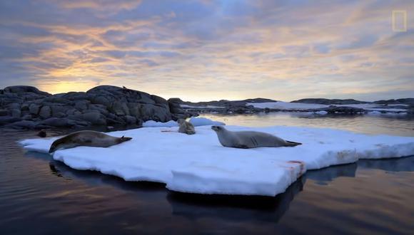"""National Geographic estrenó """"La Península Antártica"""", documental sobre expedición inédita del Pristine Seas. (Foto: Captura de video)"""