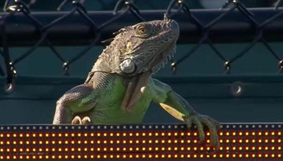 Iguana interrumpió encuentro del Masters 1000 de Miami [VIDEO]