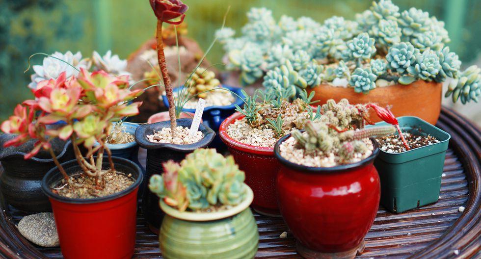 Plantas suculentas: decora con ellas tus espacios abiertos - 2