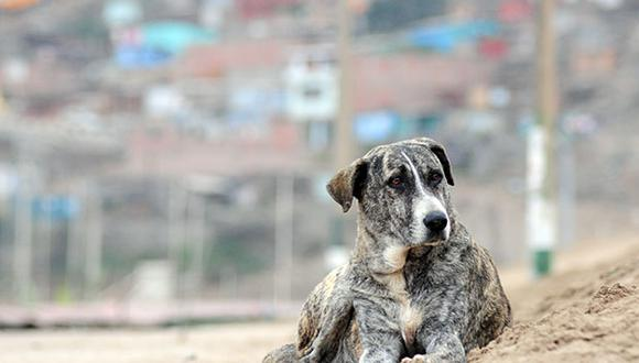 """México: perros y gatos serán """"personas no humanas"""""""
