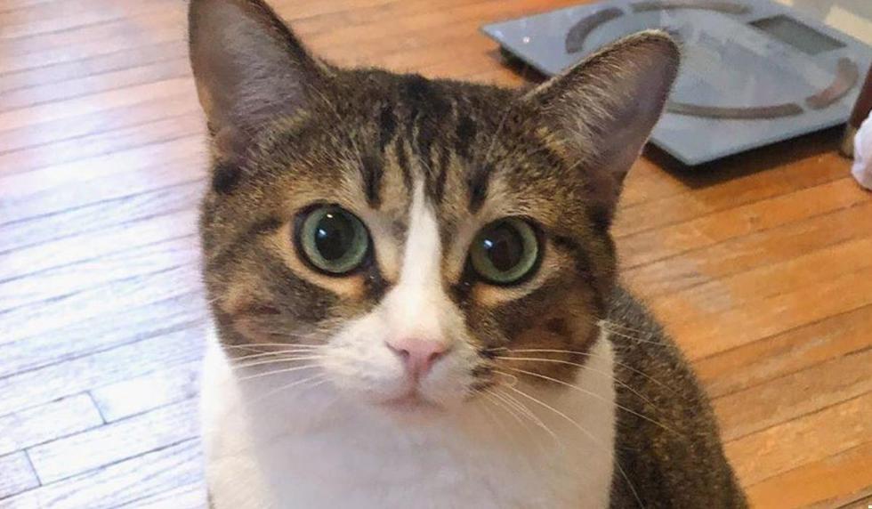 Foto 1 de 3: Ella es Luna, la gatita que motiva este artículo. (Foto: @luna_themittenpaws | Instagram)