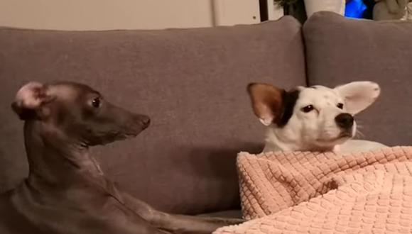 Ambos animales causan furor en la plataforma por el comportamiento que tuvieron. (YouTube: ViralHog)