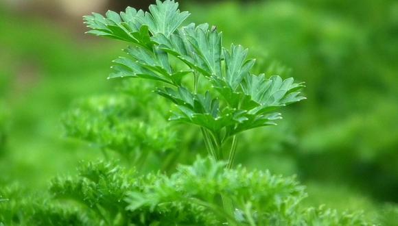 El verano es la mejor estación para sembrar hortalizas y plantas aromáticas. (Foto: Pixabay)