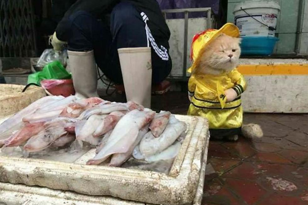 FOTO 1 DE 3 | La foto viral de un gatito llamado 'Cho' se volvió tendencia en las distintas redes sociales. | Crédito: Le Quoc Phon en Facebook. (Desliza hacia la derecha para ver más fotos)
