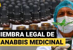 Cannabis medicinal: así se dio la primera siembra legal de marihuana en el Perú | VIDEO