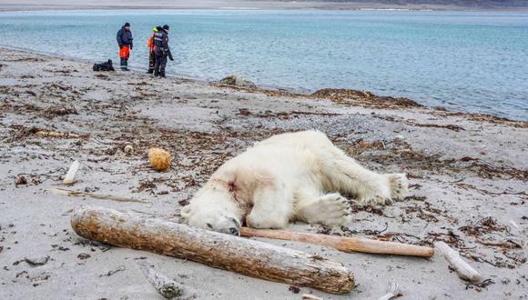 Trabajador de crucero mata a oso polar porque atacó a turistas en su hábitat. (Reuters)