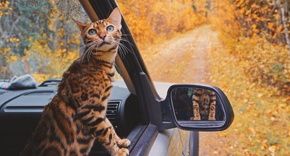 Suki es una gatita que tiene más de 1,4 millones de seguidores en Instagram y ha visitado un centenar de países. (Foto: Instagram @sukiicat)