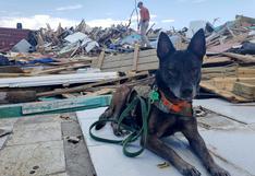 Unos 220 perros y 50 gatos murieron en albergue en Bahamas por el huracán Dorian