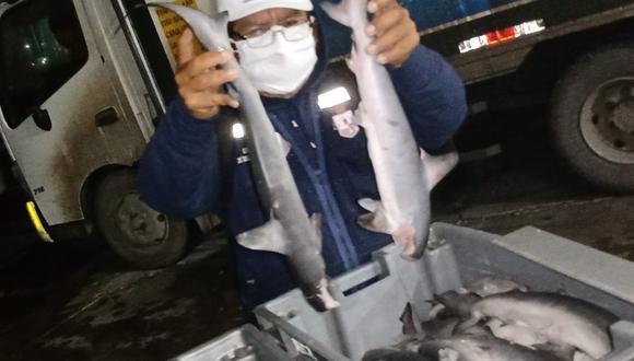 La Gerencia Regional de Desarrollo Productivo de Lambayeque incautó 230 kilos de tiburón martillo que era comercializado de manera ilegal. (Foto: Gore Lambayeque)
