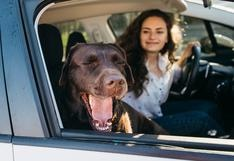 WUF: 5 consejos para que tu perro viaje cómodo y seguro en un carro