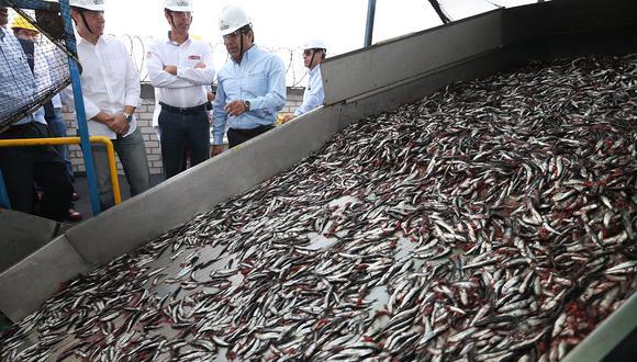 Las actividades extractivas del recurso anchoveta y anchoveta blanca quedarán suspendidas a partir de las 00:00 horas del día 8 de julio de 2019. (Foto: Andina)