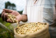 Taza de Excelencia Perú 2020: 36 cafés camino al reconocimiento internacional