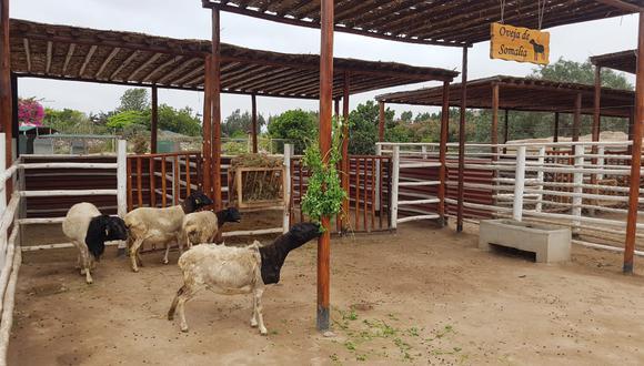 Agro Rural indicó que con esta entrega se pone en marcha el inicio de las actividades del Plan Multisectorial Ante Heladas y Friaje 2021 en la región (Foto: Archivo GEC)
