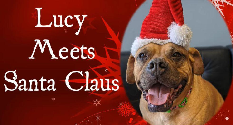 'Lucy', la perrita que le pidió a Santa Claus encontrar un nuevo hogar en Navidad   Facebook / Pennsylvania SPCA