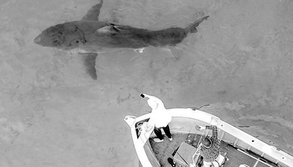 Con un drone, uno de los tripulantes logró fotografiar al imponente depredador marino (Foto: Instagram @geo.matts).
