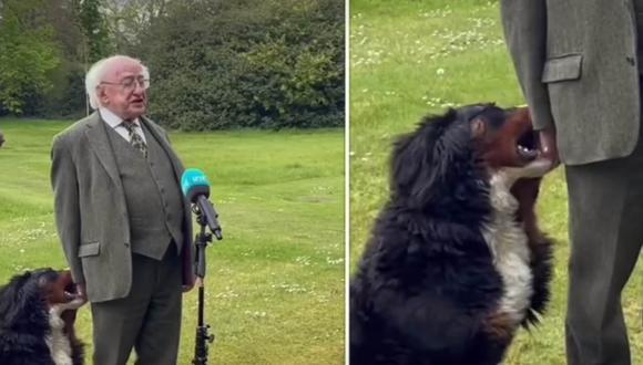 El can llamado Minsneach acaparó las miradas de todos durante una entrevista en vivo al presidente de Irlanda. | Foto: Michael D. Higgins