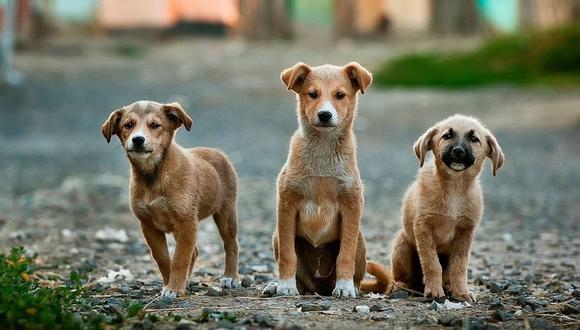 Averigua qué edad tiene tu perro para que sepas el momento que debe partir. (Foto: Pixabay)