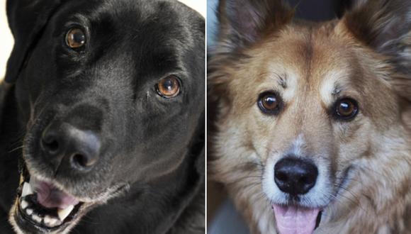 Los canes no pudieron ocultar su enorme felicidad al ver a su querido dueño. (Pixabay)