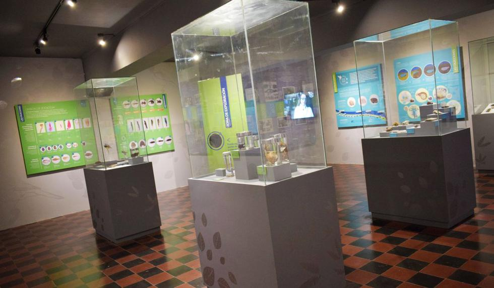 (Foto: Museo de Historia Natural San Marcos)