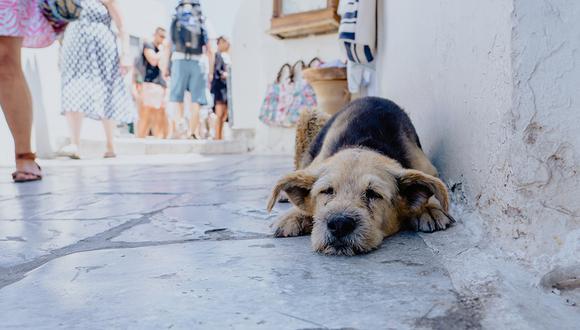 Al rescatar a un perro de la calle, ya estás cambiando por completo su vida. Sin embargo, es importante tener en cuenta todas las responsabilidades que esto implica. (Foto: Xuan Nguyen/Unsplash)