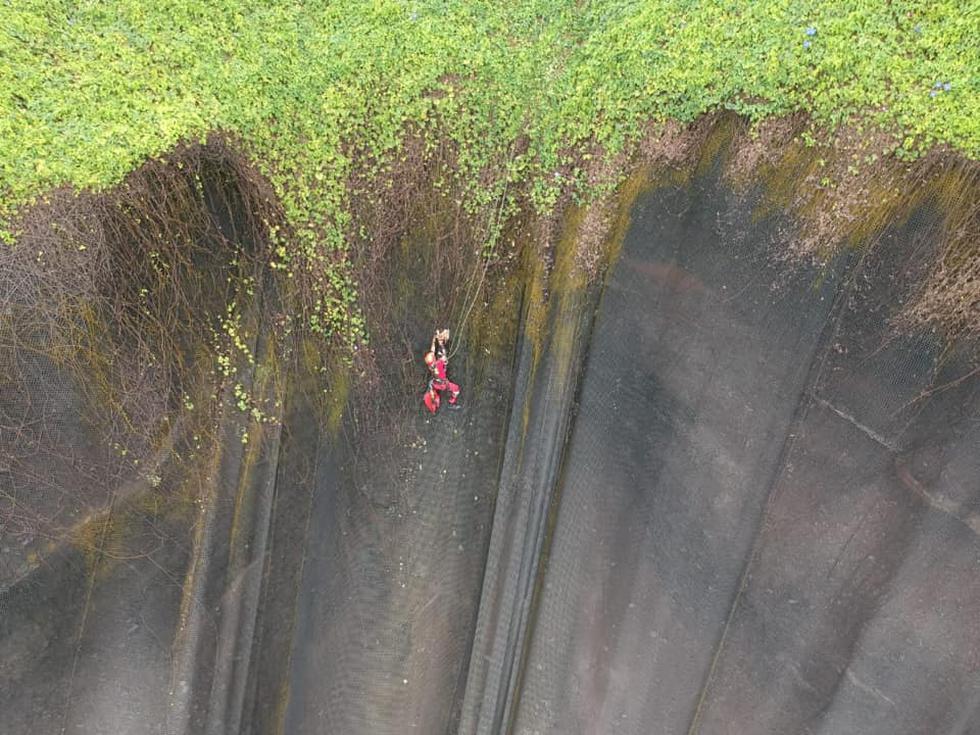 Terry quedó atrapado en la malla de la Costa Verde a la altura del Parque Miguel Grau. (Municipalidad de Miraflores)
