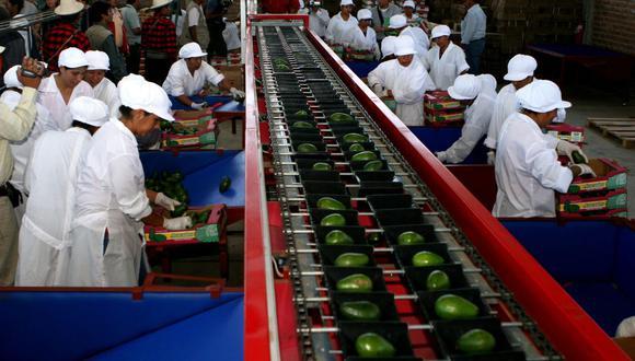 Las exportaciones de frutas en los primeros 8 meses del año superaron los US$ 2,200 millones. (Foto: Andina)