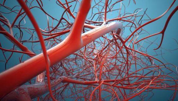 Científicos crean el vaso sanguíneo más delgado del mundo