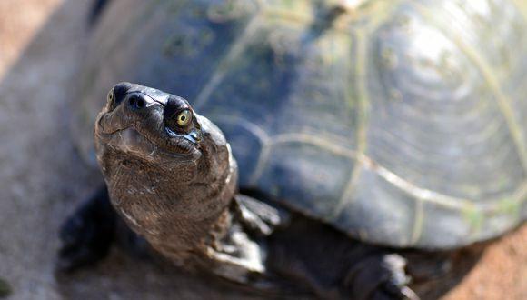 Una simpática tortuga toma una refrescante ducha y momento se hace viral en las redes sociales. (Foto: Pixabay / referencial)