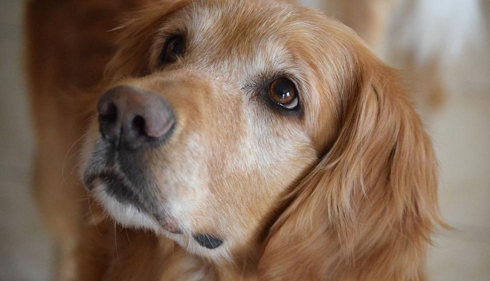 El can sorprendió a todos con su comportamiento. (Pixabay / labsafeharbor)