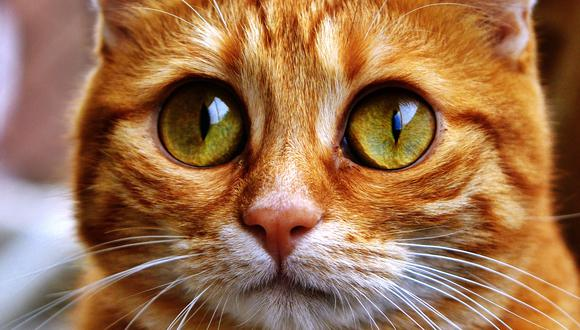 Gato cruza sus patitas delanteras a modo de disculpas y momento se hace viral en Facebook. (Foto: Pixabay / referencial)