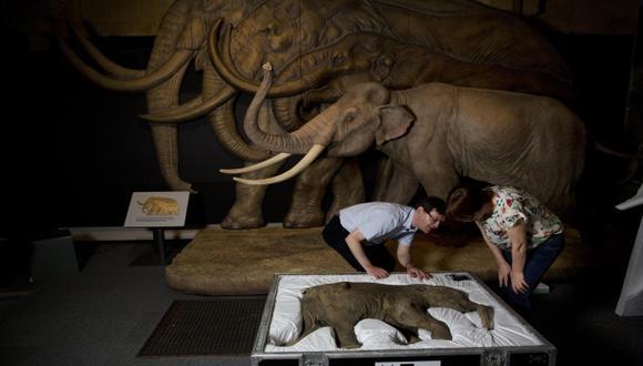 Londres vuelve a la Edad de Hielo con una muestra de mamuts
