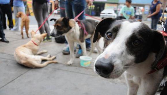 Charla sobre 'lenguaje canino' orientará a dueños de mascotas