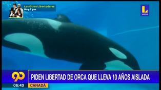 Canadá: Piden libertad de orca que lleva 10 años aislada