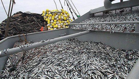 Captura de anchoveta se suspenderá por 15 días en el norte