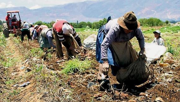 El 97% de los agricultores pertenece al segmento familiar. (Foto: Andina)
