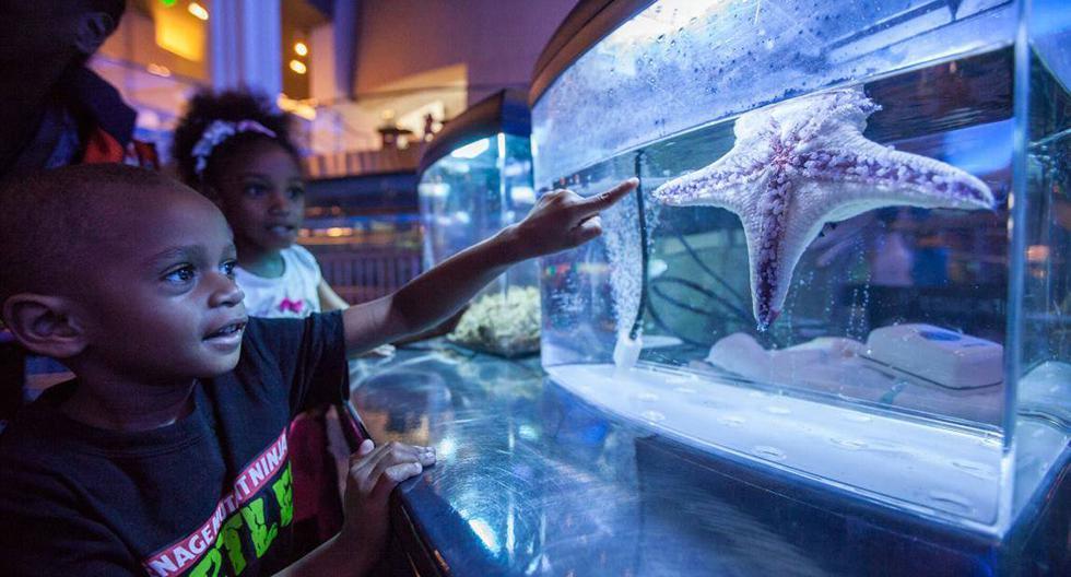 Georgia Aquarium (Estados Unidos). Se trata del más grande del mundo, ya que cuenta con más de 500 especies marinas. Por eso, la vitrina Ocean Voyager tiene 9 m de profundidad y 87 m de largo. Las ballenas beluga, los caballitos de mar barrigudos y el tiburón punta negra te sorprenderán. Por otro lado, el segundo semestre del año recibirán otros tipos de tiburones. Entrada: desde US$31.