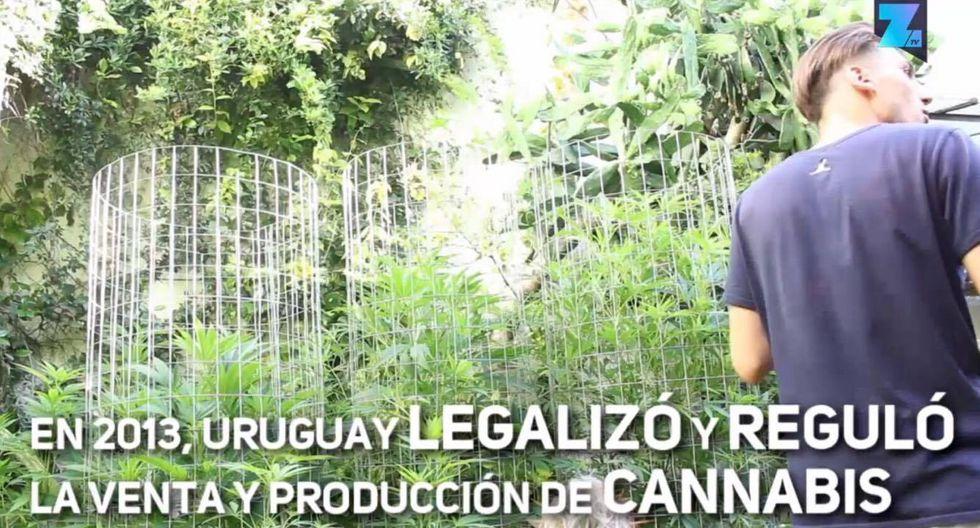 Uruguay: Descubre el primer Museo del Cannabis en Latinoamérica