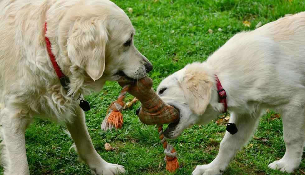 Los perros solo quería jugar, pero su hermano se negó a prestarles el preciado objeto. (Foto: Pixabay)