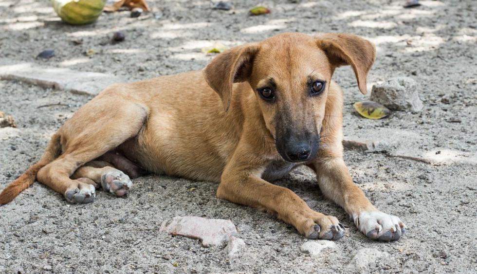 Usuarios de Facebook no pudieron evitar emocionarse al conocer la historia del can. (Foto: Referencial/Pixabay)