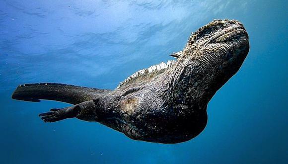 """El """"mini Godzilla"""" captado en las Islas Galápagos. (Foto: luxuryyachtfilms / Instagram)"""